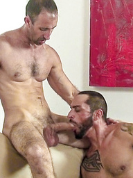 Hairy gay daddies Tom and Steve get together for their first bareback fucking